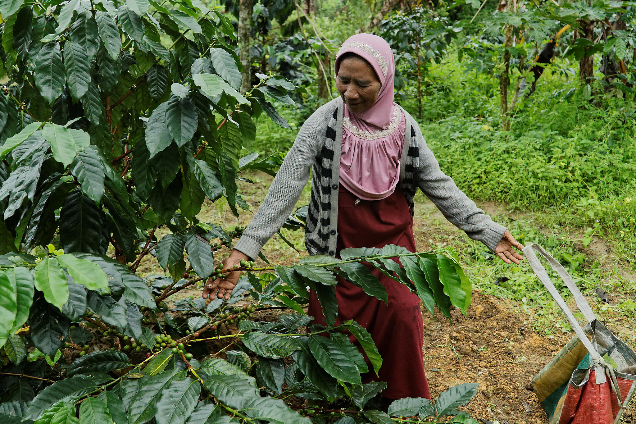 Coffee farmers in harmony with the forest